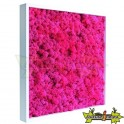 TABLEAU VEGETAL STABILISE KANDIPINK LAQUE BLANC 40X40